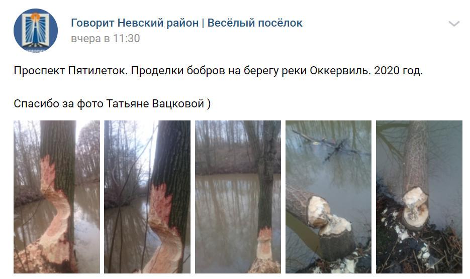 Скриншот из vk.com/govorit_nrayon