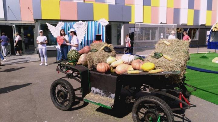 «Урожай»: банк «Кубань Кредит» рассказал о специальной программе для аграриев