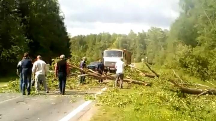 На трассе в Ярославской области рухнуло дерево и перекрыло всю дорогу