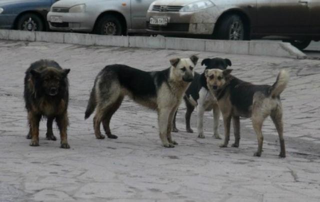 В Перми прокуратура выявила некачественный отлов собак