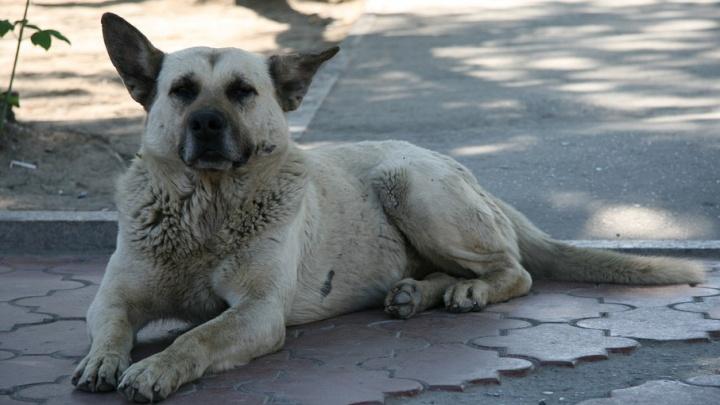 В Тюменском районе собака покусала трехлетнюю девочку