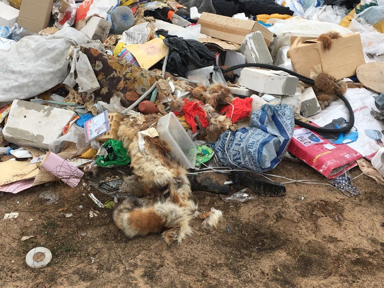 Среди мусора валяются шкуры животных