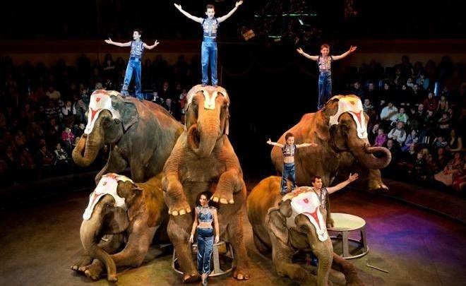 Великаны на манеже: трехтонные слоны сделают стойку в ростовском цирке