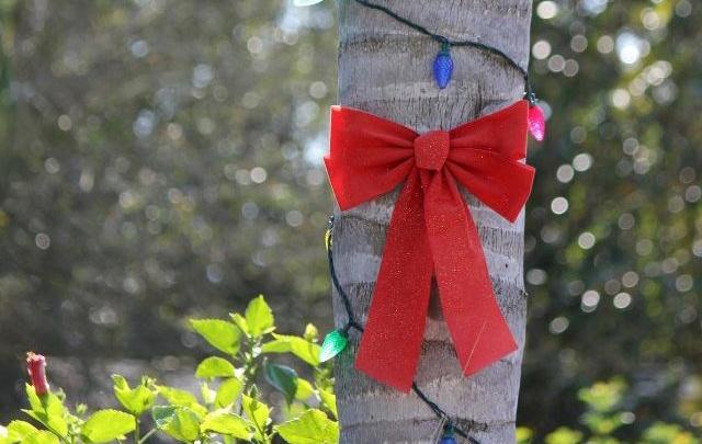 Наши в Америке: на улицах украшают пальмы на Рождество