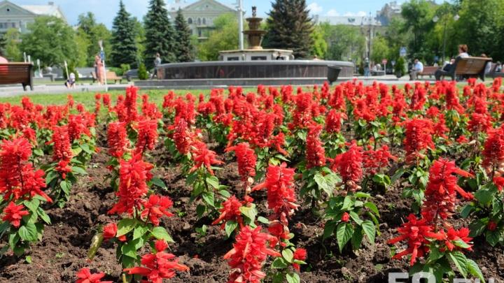 Не одуванчиком единым: пересчитываем цветы на пермских клумбах