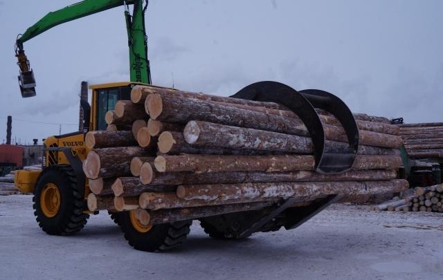 Следком начал проверку по факту гибели рабочего на лесозаготовке в Шенкурском районе