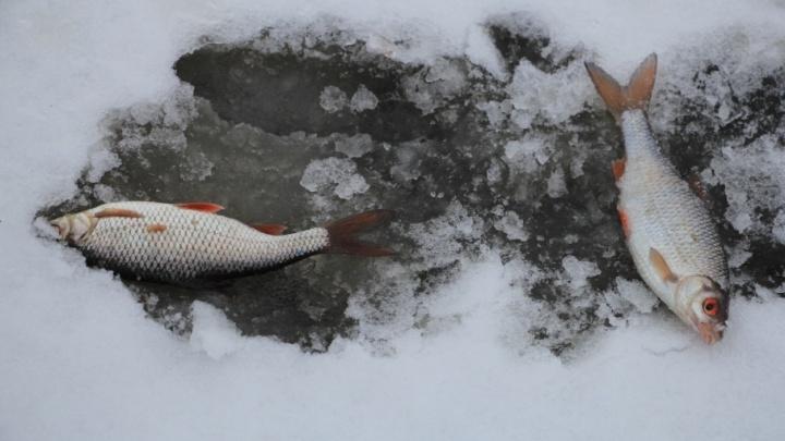 Крупный рыбоперерабатывающий завод появится в Архангельске в 2019 году