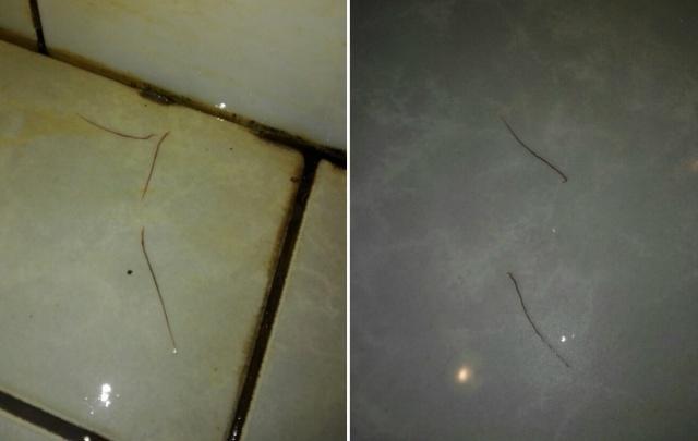 Студенты ПГНИУ пожаловались на червей в душе спортивного корпуса вуза