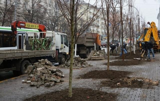 Полмиллиона рублей потратят на 22 клена в Первомайском районе Ростова