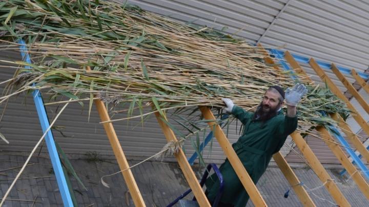 Еврейская община Волгограда обзавелась новой суккой