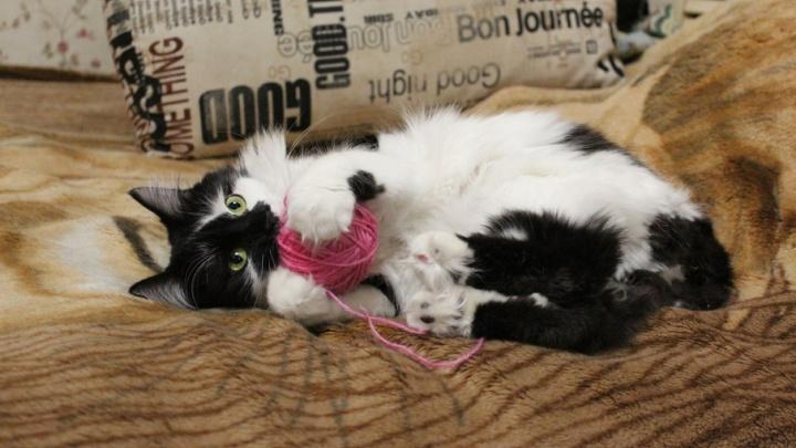 Жительница Ростова ищет дом для избитой на остановке кошки
