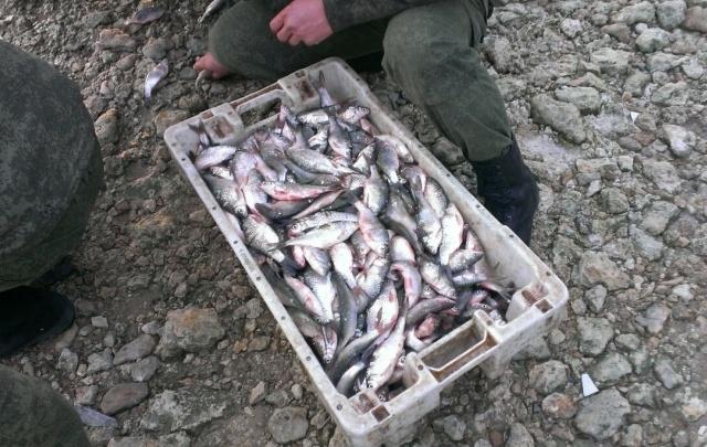 В Ростовской области рыбаки незаконно поймали тысячу таранок