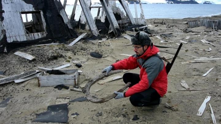 «Русская Арктика» поделилась первыми результатами экспедиции на необитаемый остров Земли Франца-Иосифа