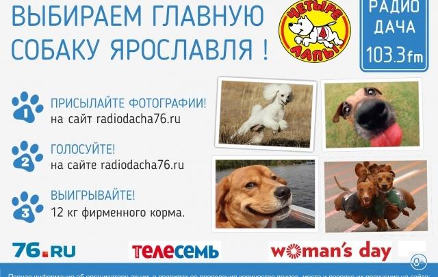 Радио Дача 103,3 FM выбирает «Главную собаку Ярославля»