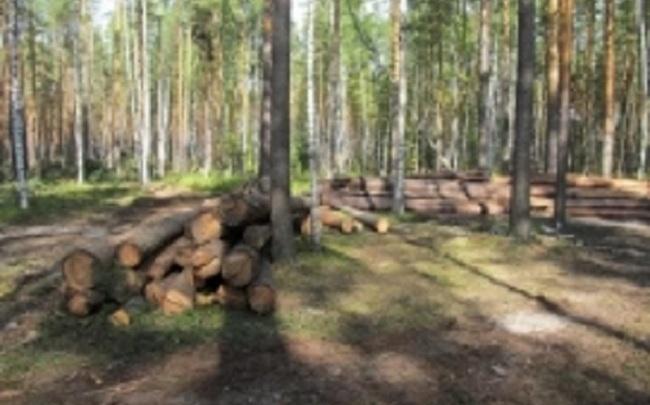 В Ярославле мужчина заплатил штраф за вырубку леса