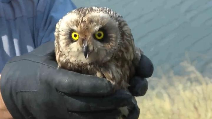 В «Самарской Луке» на волю отпустили великолепную пятерку диких птиц