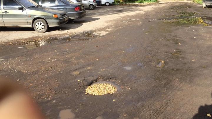 Ярославцы заделывают ямы в дорогах грецкими орехами: фото