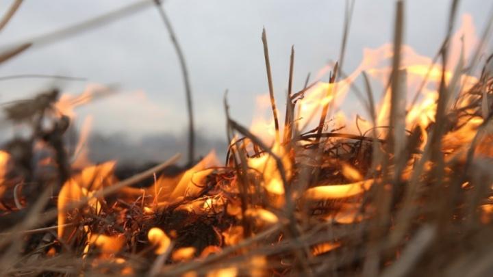 Никаких костров и шашлыков в лесу: в Тюменской области ввели пожароопасный режим