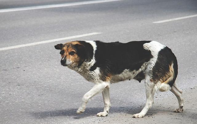 Для владельцев домашних животных в Тюмени выпустили специальную памятку