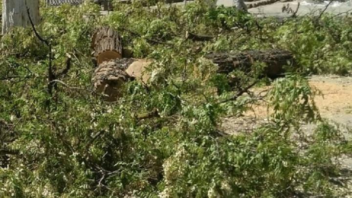 В парке «Дружба» после проверки прокуратуры прекратили спиливание деревьев