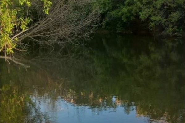 На озере Леснуха мусора не обнаружили