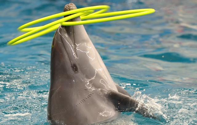 Челябинск встречает «Дельфин-шоу»: только до 29 апреля – скидки 25%