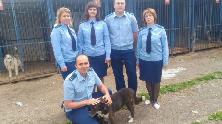 Работники Тюменской природоохранной прокуратуры помогли бездомным животным