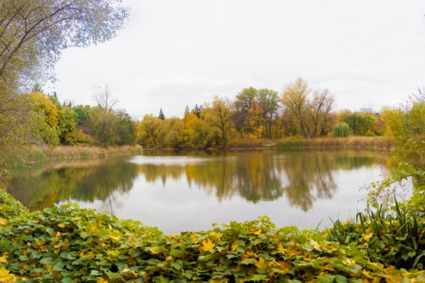 Ботанический сад станет доступнее для посетителей