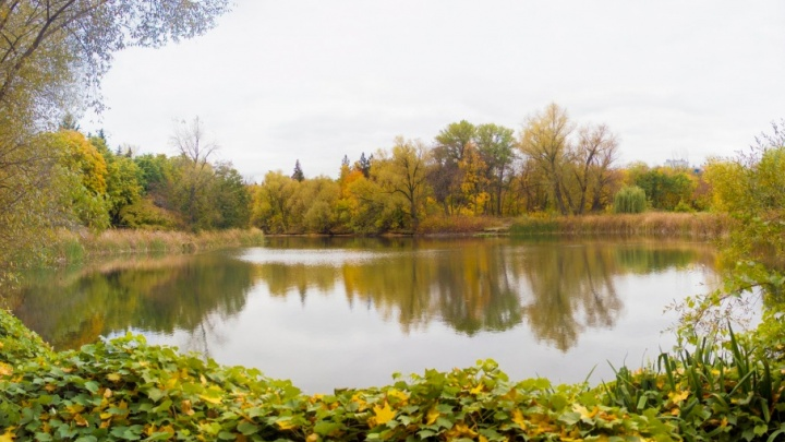 Проректор: в Ботаническом саду озеро исчезнет из-за разрушенной дамбы