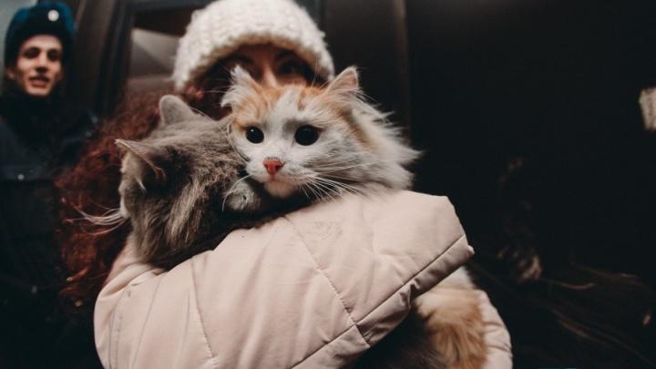 Люди уехали, животные остались: в сгоревшем доме на Олимпийской уже неделю голодают кошки
