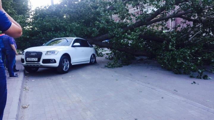 «Древопад» в Ростове: за день рухнувшие деревья разбили пять автомобилей