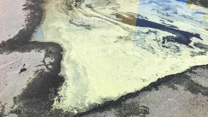 В Тюмени после дождя появились «кислотные» лужи. Рассказываем, почему это нормально
