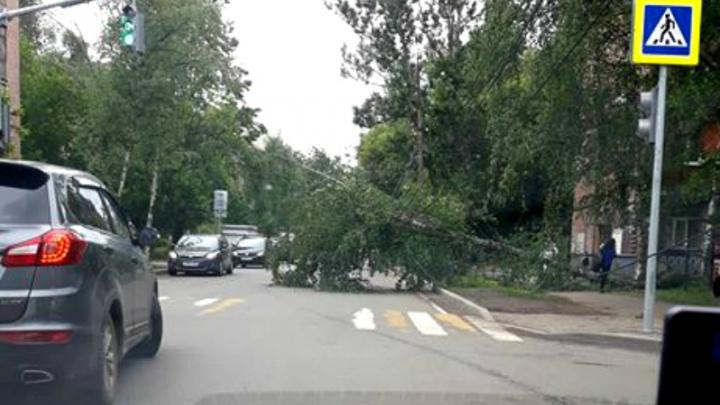 В центре Ярославля посреди дороги рухнуло дерево: машины едут со скоростью пешеходов