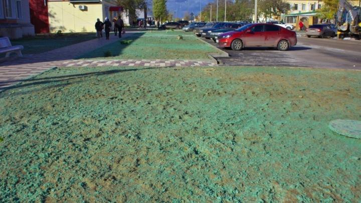 Жители Калача-на-Дону возмущены покрашенным перед приездом Путина газоном