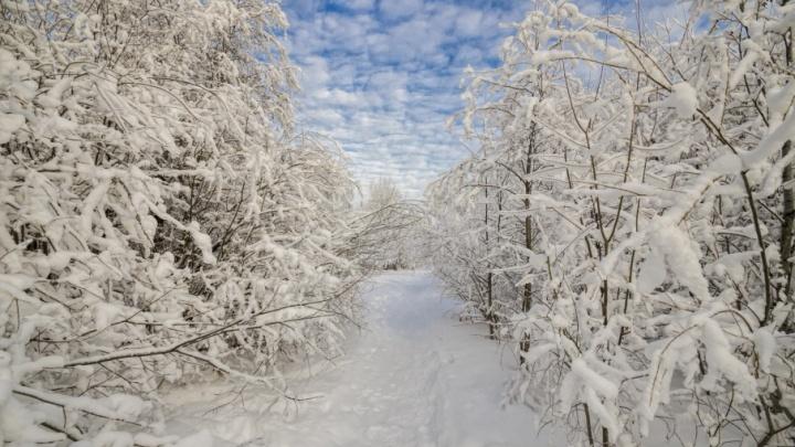 Морозы и метель: выходные в Поморье будут холодными