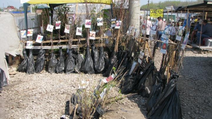 На мини-рынках Самарской области торговали саженцами без документов