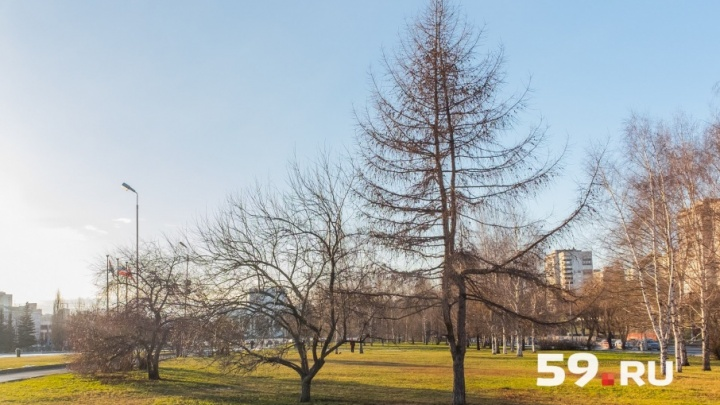 Солнечно и без осадков: синоптики рассказали о погоде в Перми на конец ноября