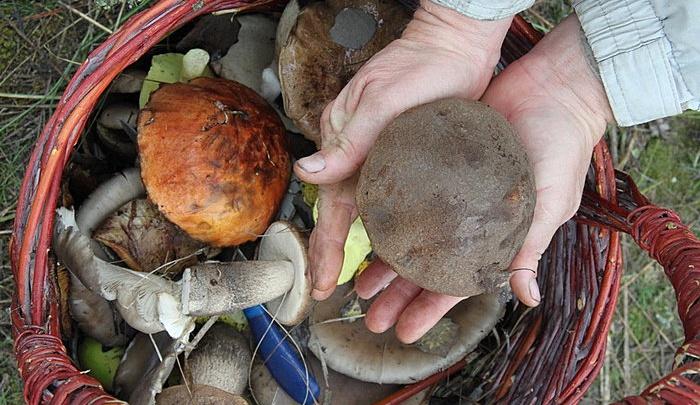 Волгоградцы соберут мешки с грибами и мусором