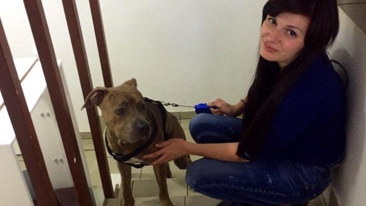 Ростовчанка спасла пса с перерезанной шеей