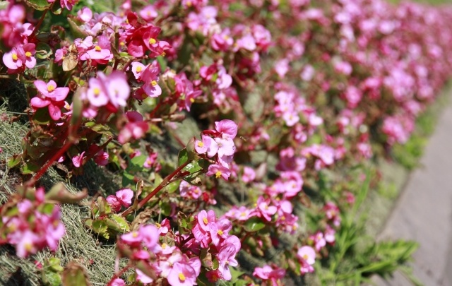 В парках Самары высадят цветы на 3,1 млн рублей: работы стартуют в апреле