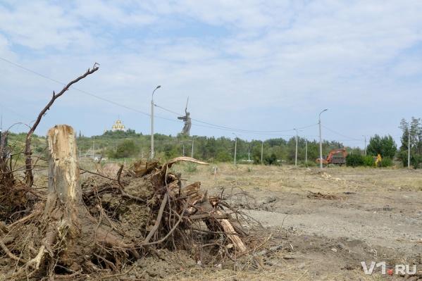Деревья высаживались в 1965 году в память погибших на войне сталинградцах