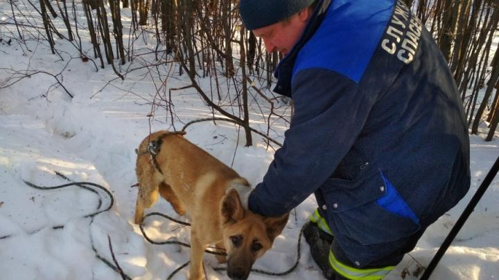 «Огрызнулась пару раз»: в Перми из ямы спасли собаку, просидевшую четыре дня без еды