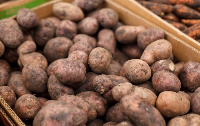 В Тюменской области возводят новые теплицы для выращивания семенного картофеля