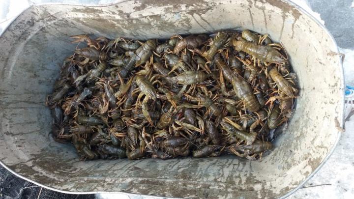 В Самарской области экс-инспектора рыбоохраны оштрафовали за незаконную ловлю раков