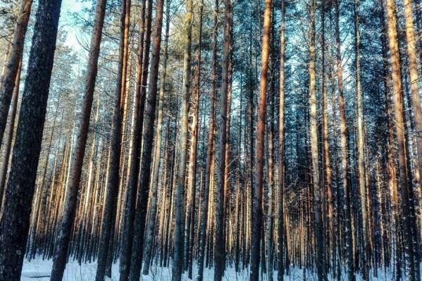 Лидер по восстановлению леса — Виноградовский район
