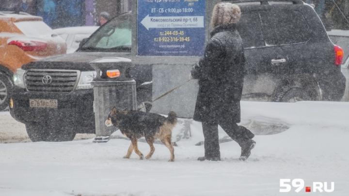 Осторожно, метель: МЧС предупреждает о сильном ветре в Прикамье