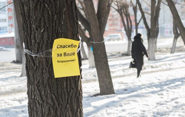 Власти объяснили вырубку аллеи в Челябинске опасностью старых деревьев
