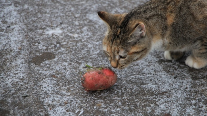 Путассу и картофель оказались одними из самых быстро дорожающих продуктов в Поморье
