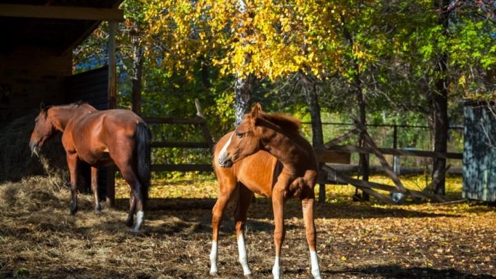 Коней — в стойла, детей — в ясли: челябинский садик с конюшней ждёт большая реконструкция