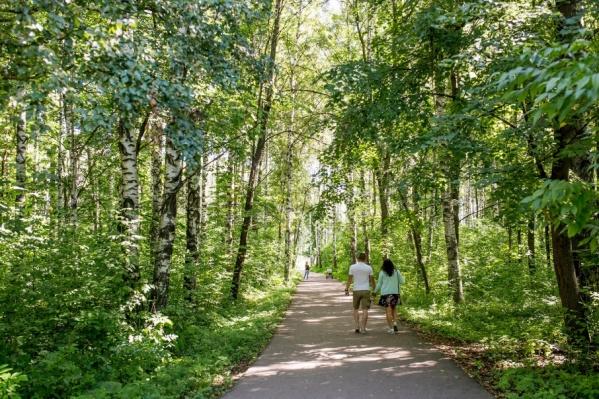 Павловская роща летом — любимое место жителей Дзержинского района